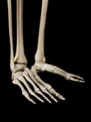 medical 3d illustration of the foot bones