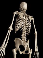 medical 3d illustration of the skeletal back