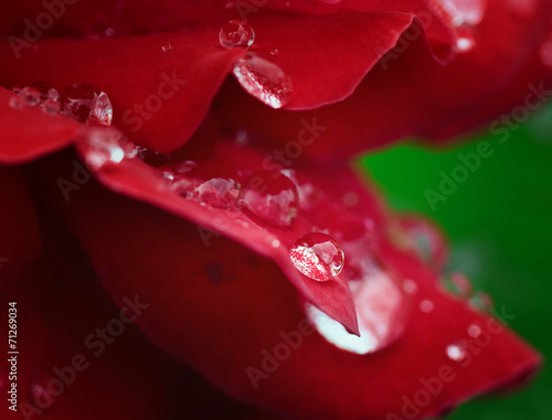 Red Rose with Drops © serkucher