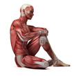Постер, плакат: medical 3d illustration of the male muscular system