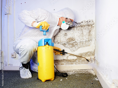 Pest controler eliminiates a mold infestation - 71271609