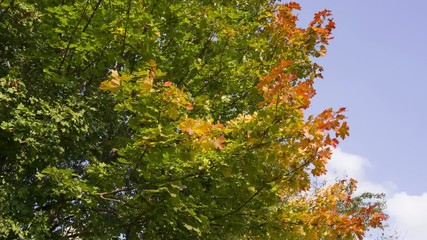 Herbstlaub 07