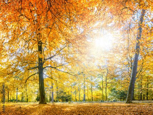 bunter Herbstwald - 71274451