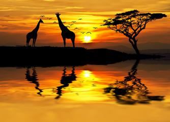 jirafas en africa al amanecer