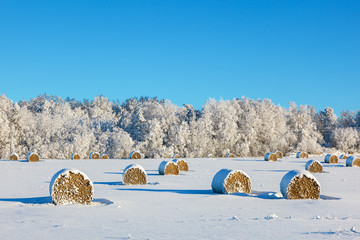 Hay bales on a winter field