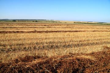 Buckwheat oblique