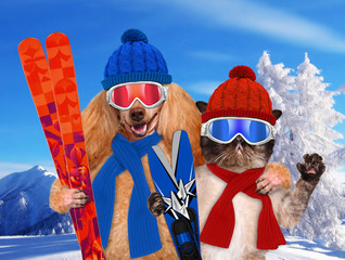 Dog with a cat with skis