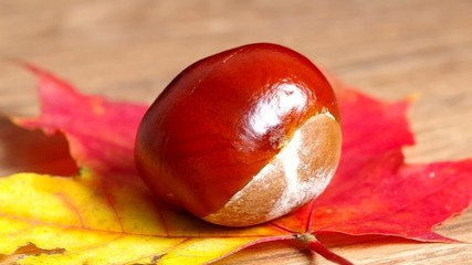 Chestnuts on colorful leaves spins on wooden table