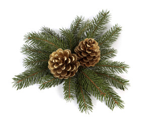 Two big pine cones on the white background