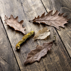 autumn leaves on wooden  boards background