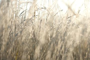 Трава в инее