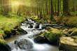 Leinwandbild Motiv Green forest at spring time