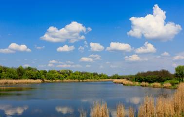 Summer scene on lake