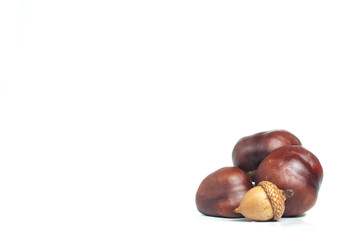 chestnut with crust and acorn on a white background