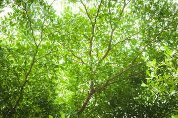 Green Tree looking up