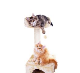 Katzenbabys mit Kratzbaum