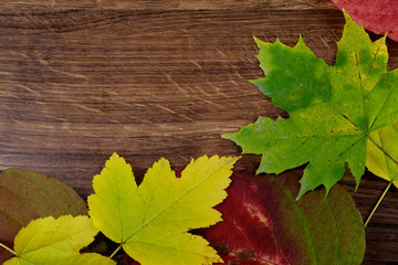 Autumn leaves on old wooden background