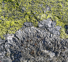 Background - lichen on the stone, Austrian Alps, Austria
