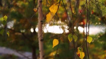 Autumn leaves & river bokeh