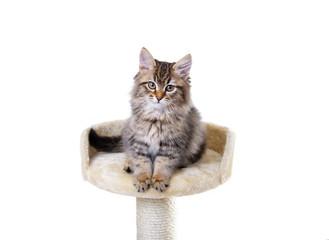 Katzenbaby auf einem Kratzbaum