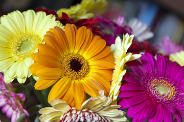 Bouquet of multicolored gerberas. Floral pattern.