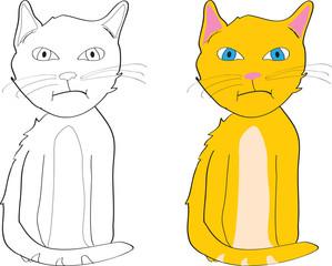 grouchy cat