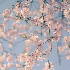 Retro Filter Cherry Blossom