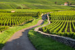 Vineyard. Pommard, Cote de Beaune, d'Or, Burgundy, France - 71286846