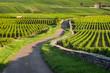 Leinwanddruck Bild - Vineyard. Pommard, Cote de Beaune, d'Or, Burgundy, France