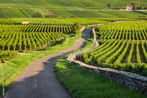 Leinwanddruck Bild Vineyard. Pommard, Cote de Beaune, d'Or, Burgundy, France