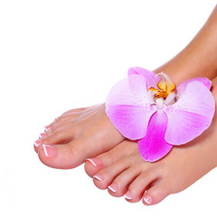 Pedicure with orchid flower isolated. Female feet