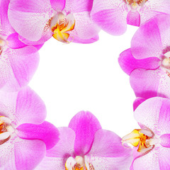 Orchid Flowers Frame isolated. Hot Pink Flowers