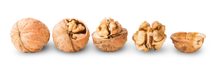 Several Nuts Lying In A Row