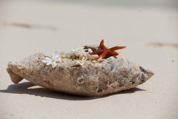 Rest in Paradise - Malediven - Muschel und Seestern im Sand