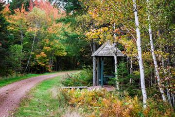 Fall Walking Trail