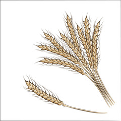 Colored hand drawing  wheat ears