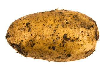 Dirty potato ground freshly picked from the field