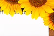 Beautiful sunflowers with notepad close up