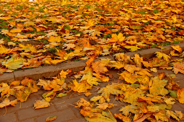 Stone pavement in golden autumn leaves