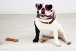 French bulldog with sunglasses in room