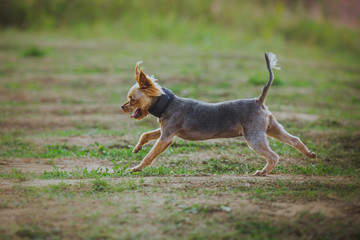 dog coursing in fields