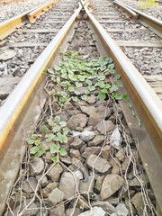 Line of railway crossing and ivy in Bangkok, Thailand