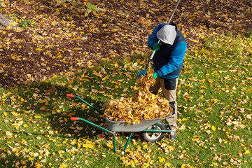 Male gardener during autumn