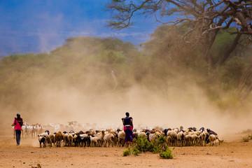 Masai shephard in Amboseli