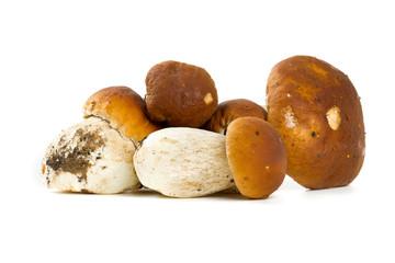 boletus mushrooms over white