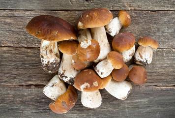 boletus mushrooms on wooden surface