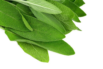 sage isolated on white