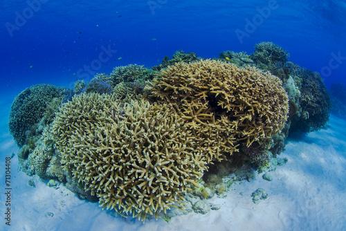 Papiers peints Recifs coralliens underwater
