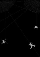 three gray spiders in web illustration