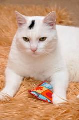 Weiße Katze auf Kunstfell